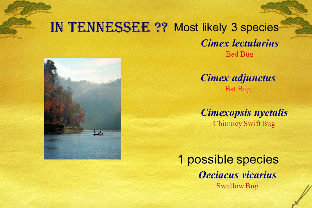 In Tennessee 1 possible species Most likely 3 species