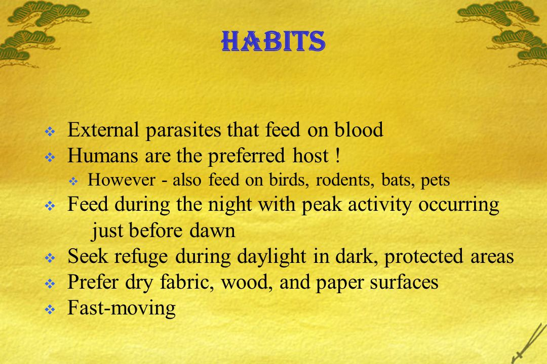 Habits External parasites that feed on blood