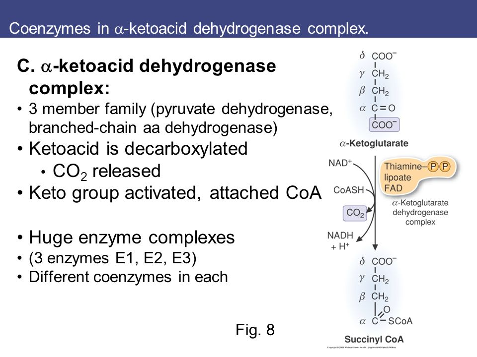Ch. 20 Tricarboxylic acid cyle Student Learning Outcomes: - ppt ...