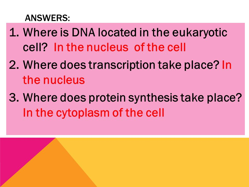 protein synthesis takes place The topic of protein synthesis isn't brought up much on muscle building forums because of this, you might be tempted to click away from this article, or dismiss it as unimportant don't the topic of protein synthesis, as it relates to muscle building, is extremely important.