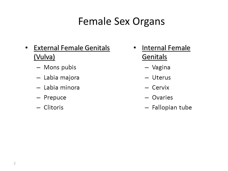 Female Sex Organs External Female Genitals (Vulva)