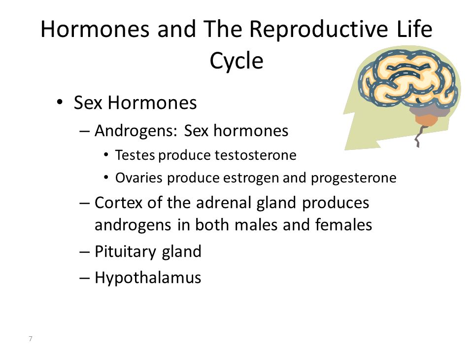 Hormones and The Reproductive Life Cycle