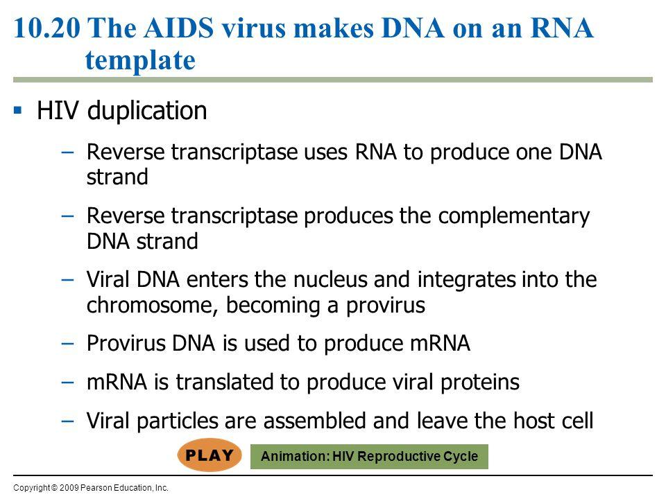 Hiv Virus Model Protein Coat