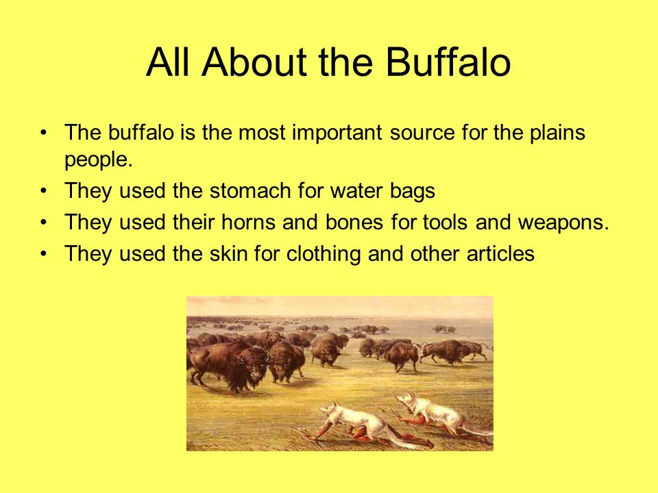 All About the Buffalo The buffalo is the most important source for the plains people. They used the stomach for water bags.