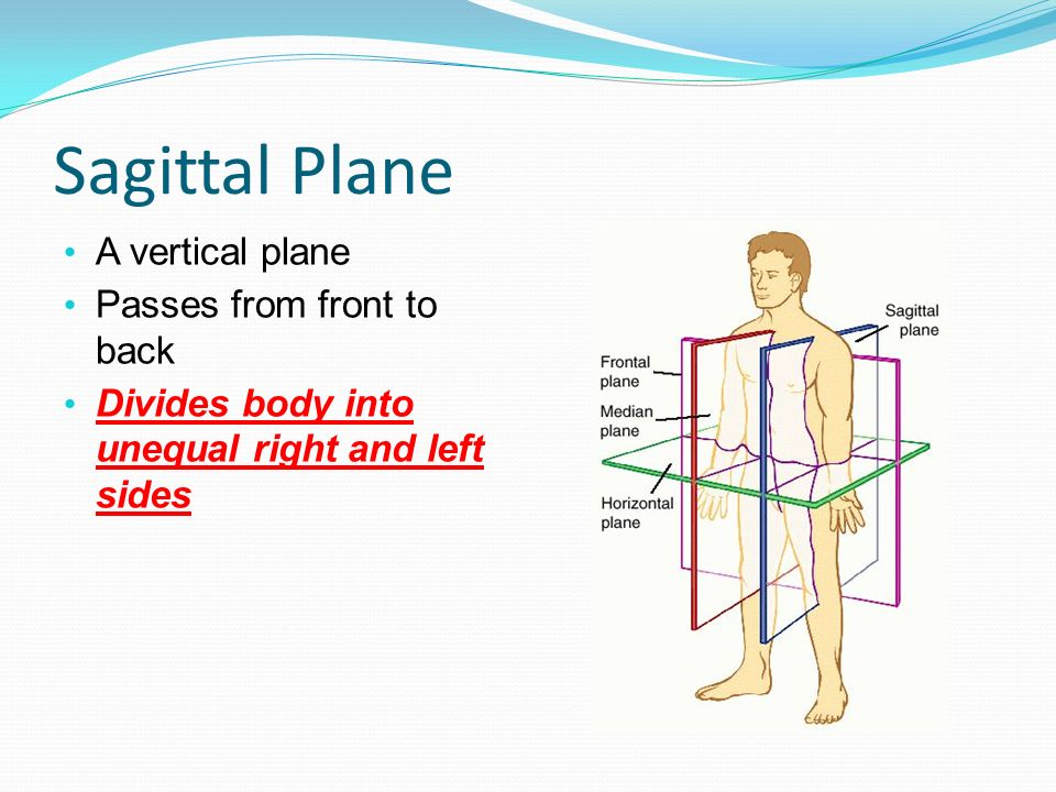 Sagittal Plane A vertical plane Passes from front to back