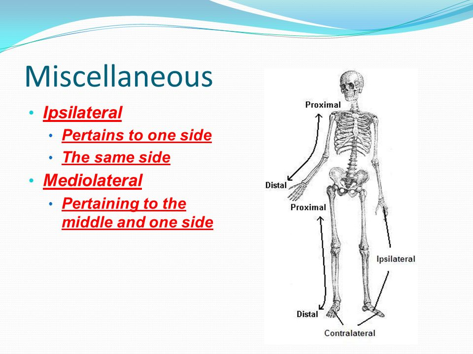 Miscellaneous Ipsilateral Mediolateral Pertains to one side