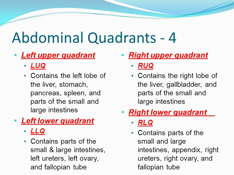 Abdominal Quadrants - 4 Left upper quadrant Left lower quadrant