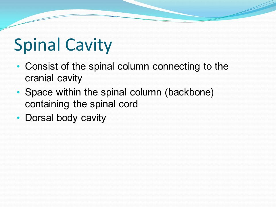 Spinal Cavity Consist of the spinal column connecting to the cranial cavity. Space within the spinal column (backbone) containing the spinal cord.