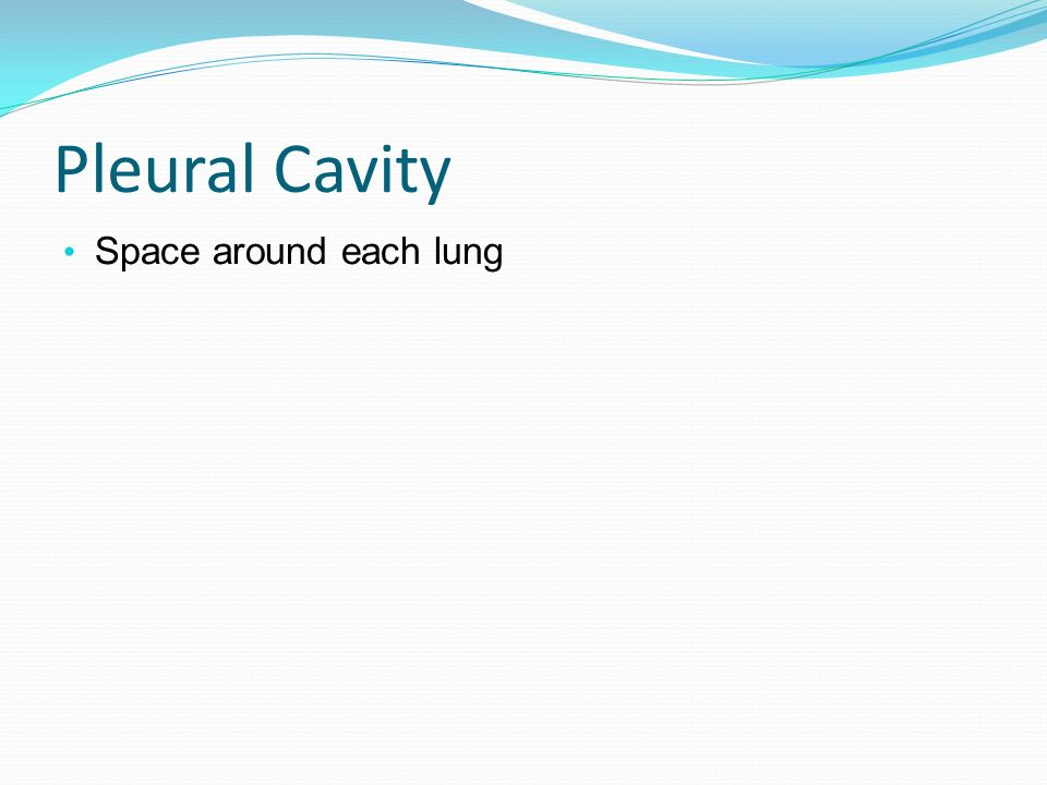 Pleural Cavity Space around each lung