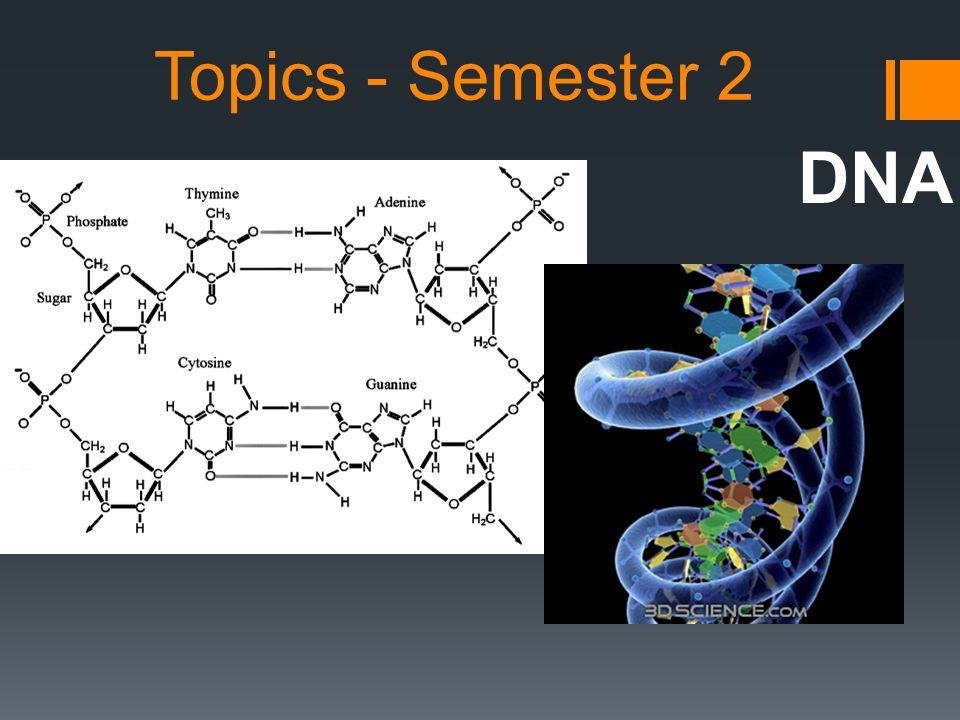 Topics - Semester 2 DNA