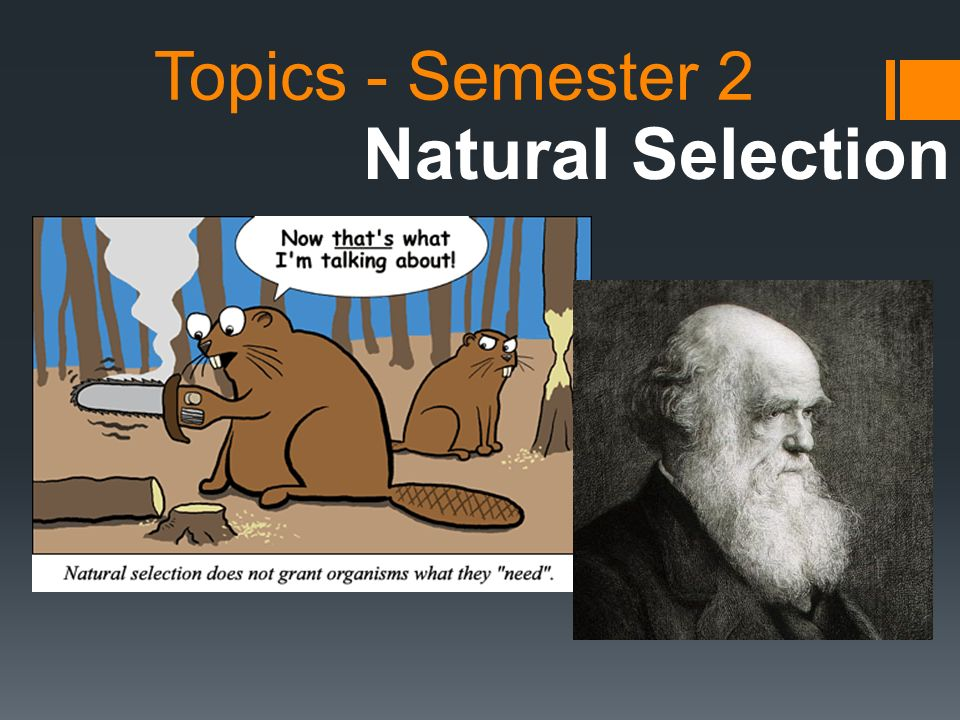 Topics - Semester 2 Natural Selection