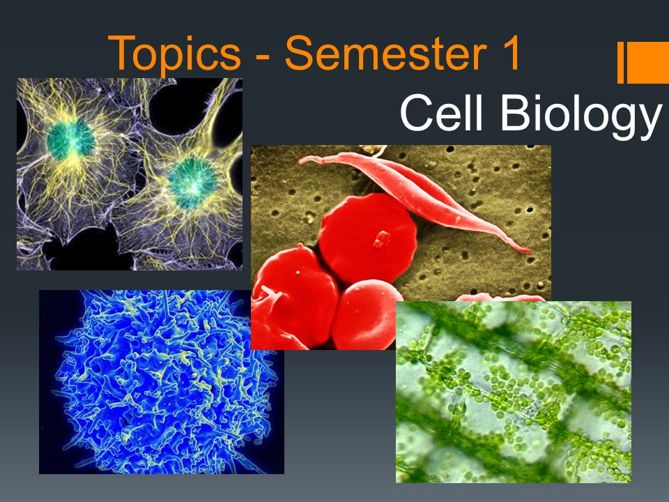 Topics - Semester 1 Cell Biology
