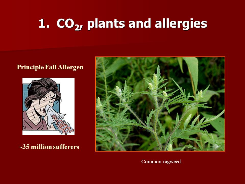 1. CO2, plants and allergies