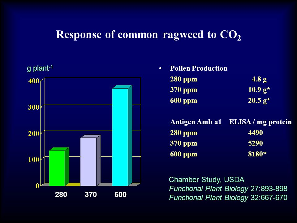 Response of common ragweed to CO2