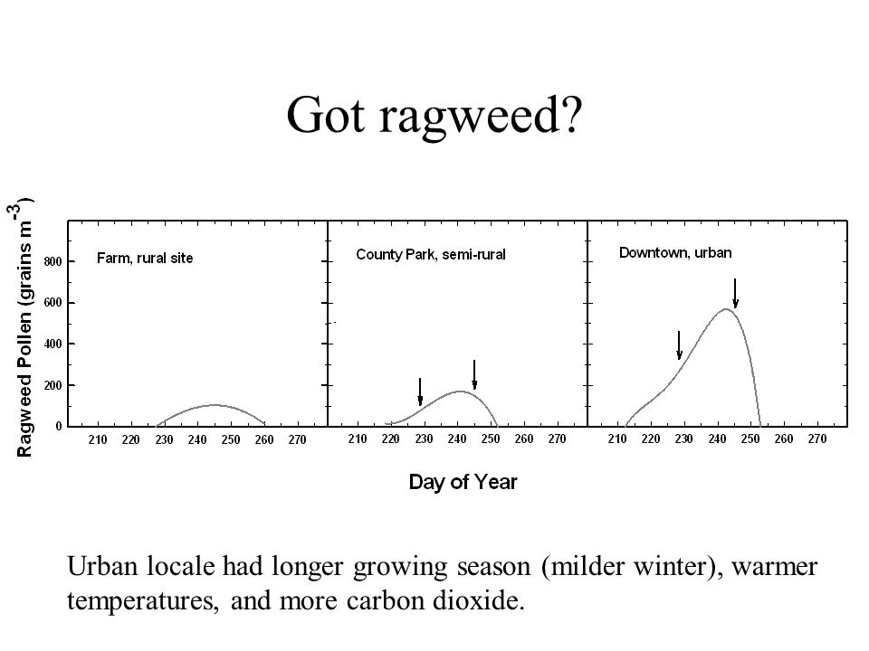 Got ragweed. 2006. Urban locale had longer growing season (milder winter), warmer.
