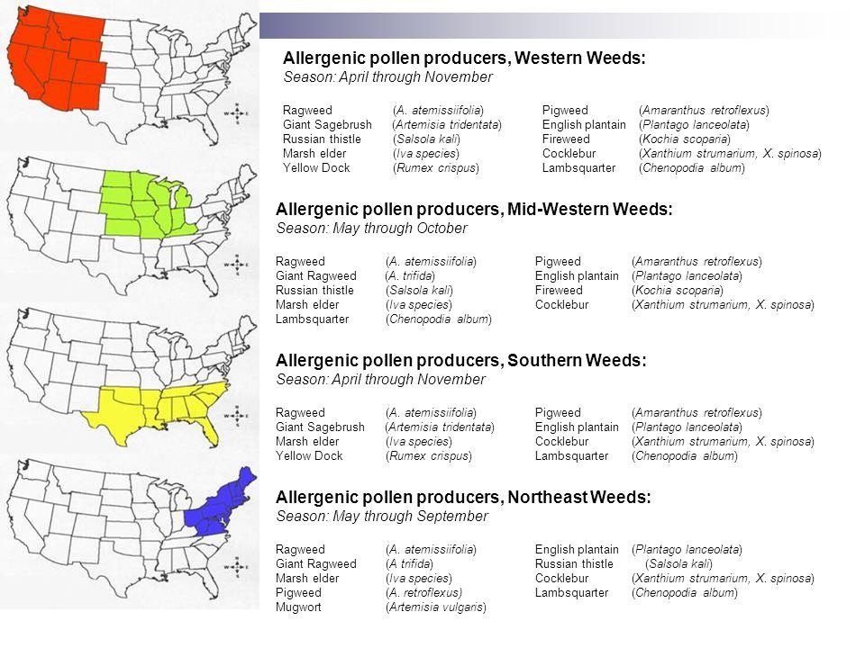 Allergenic pollen producers, Western Weeds: