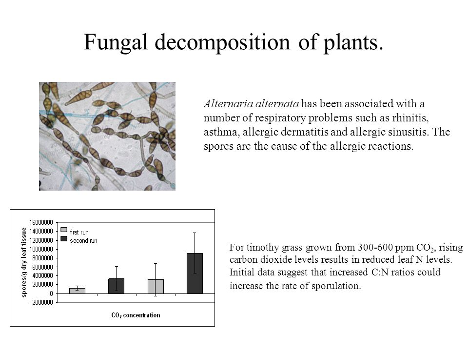 Fungal decomposition of plants.