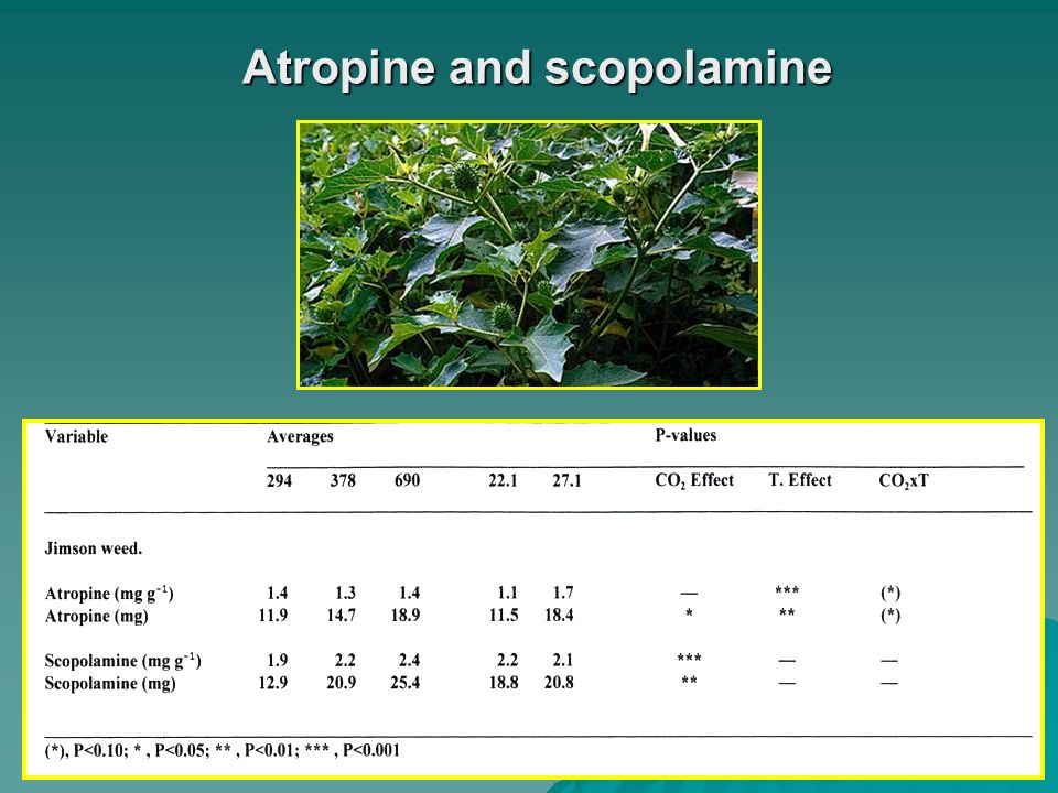 Atropine and scopolamine