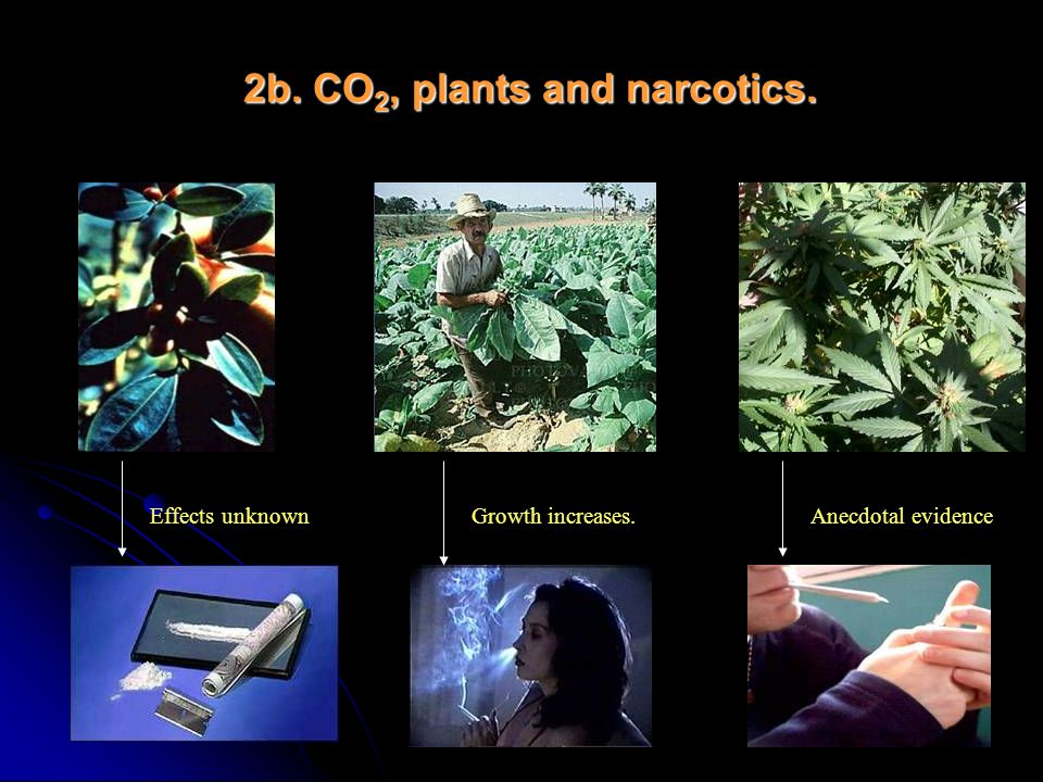2b. CO2, plants and narcotics.