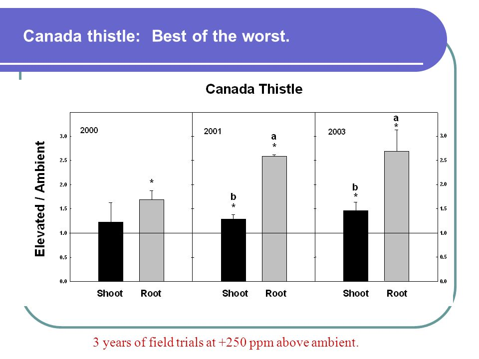 Canada thistle: Best of the worst.