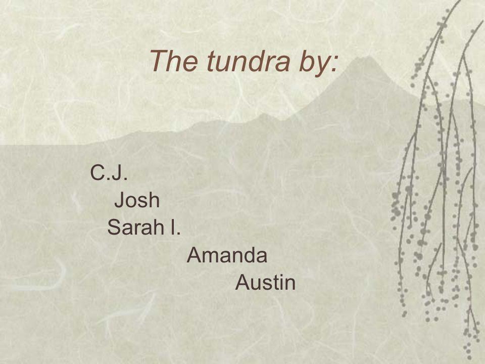 The tundra by: C.J. Josh Sarah l. Amanda Austin