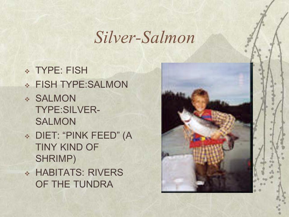 Silver-Salmon TYPE: FISH FISH TYPE:SALMON SALMON TYPE:SILVER-SALMON