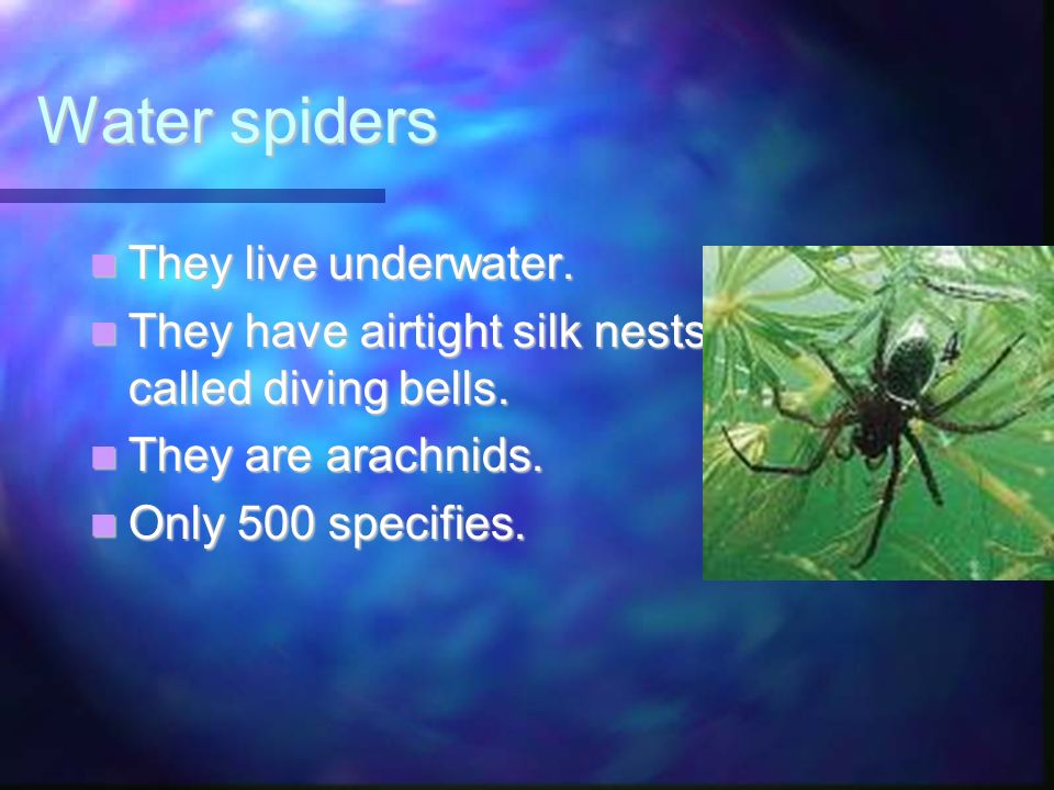 Water spiders They live underwater.