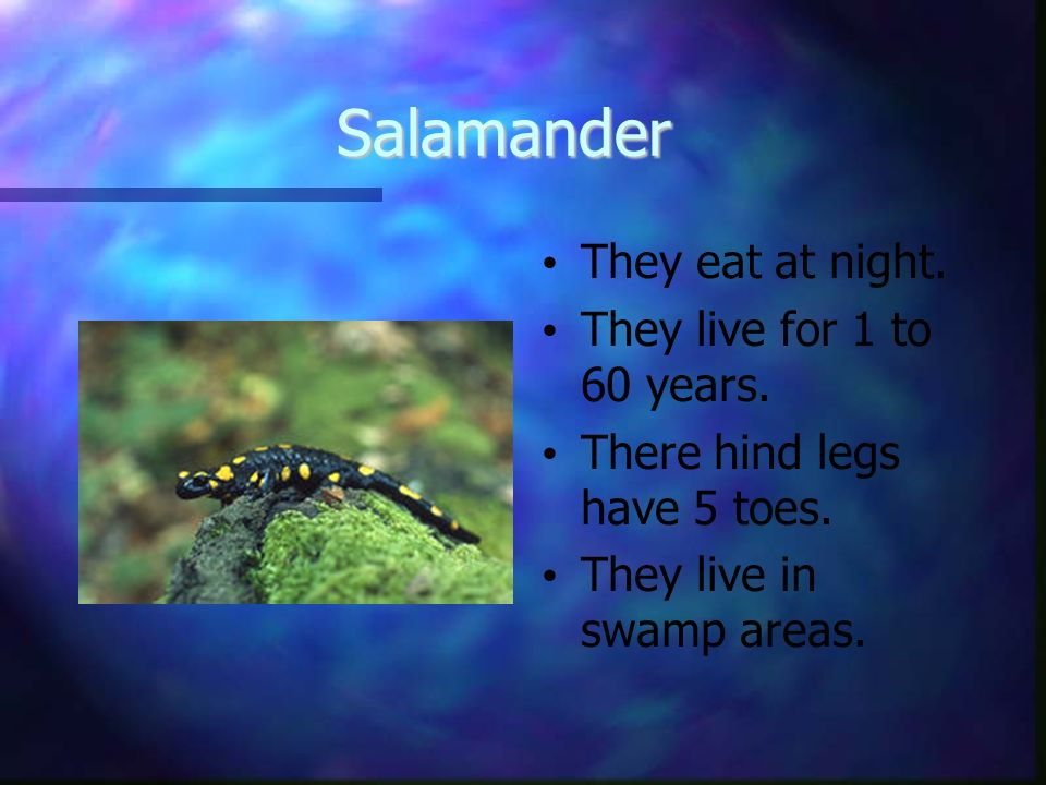 Salamander They eat at night. They live for 1 to 60 years.