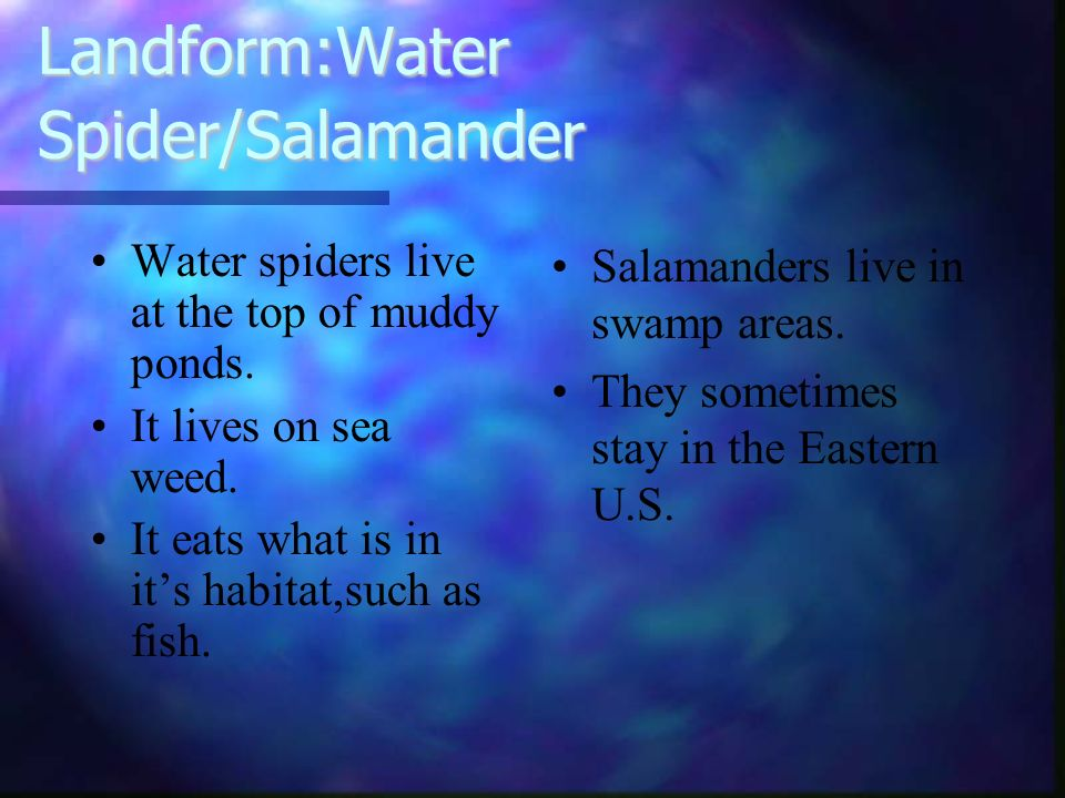 Landform:Water Spider/Salamander