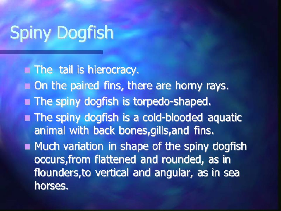 Spiny Dogfish The tail is hierocracy.