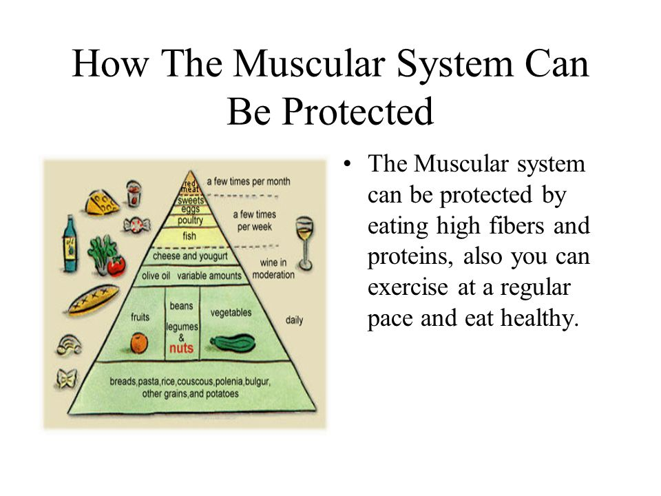 How The Muscular System Can Be Protected