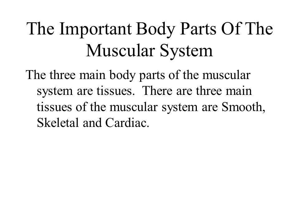 The Important Body Parts Of The Muscular System