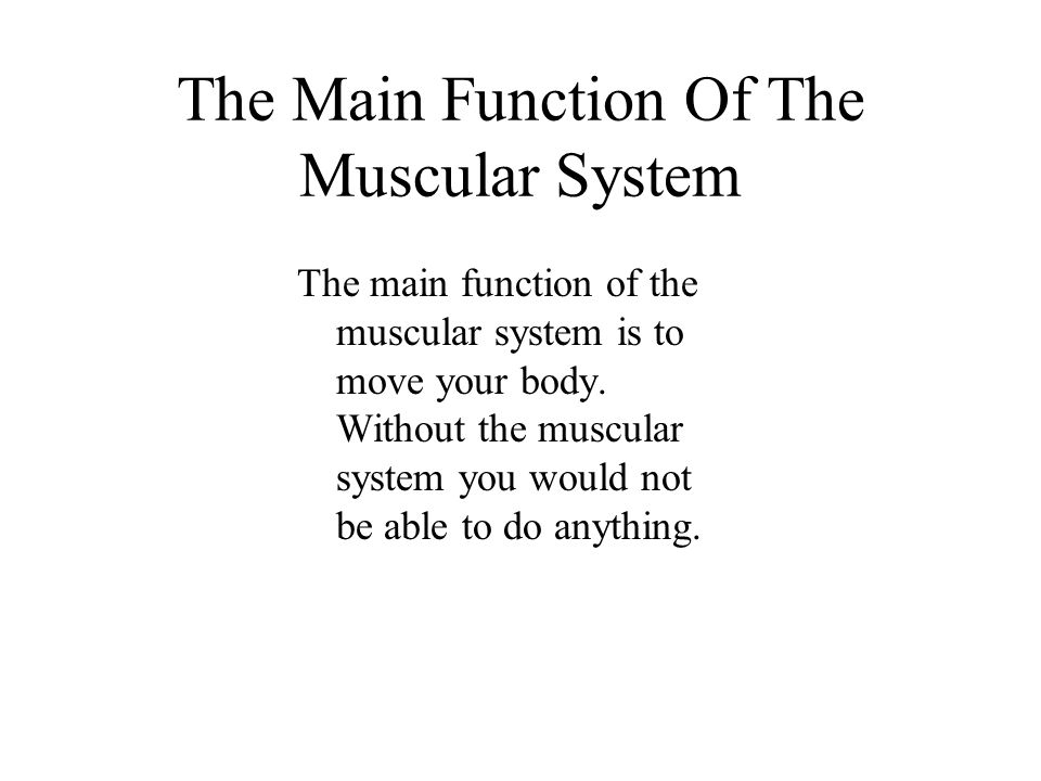 The Main Function Of The Muscular System