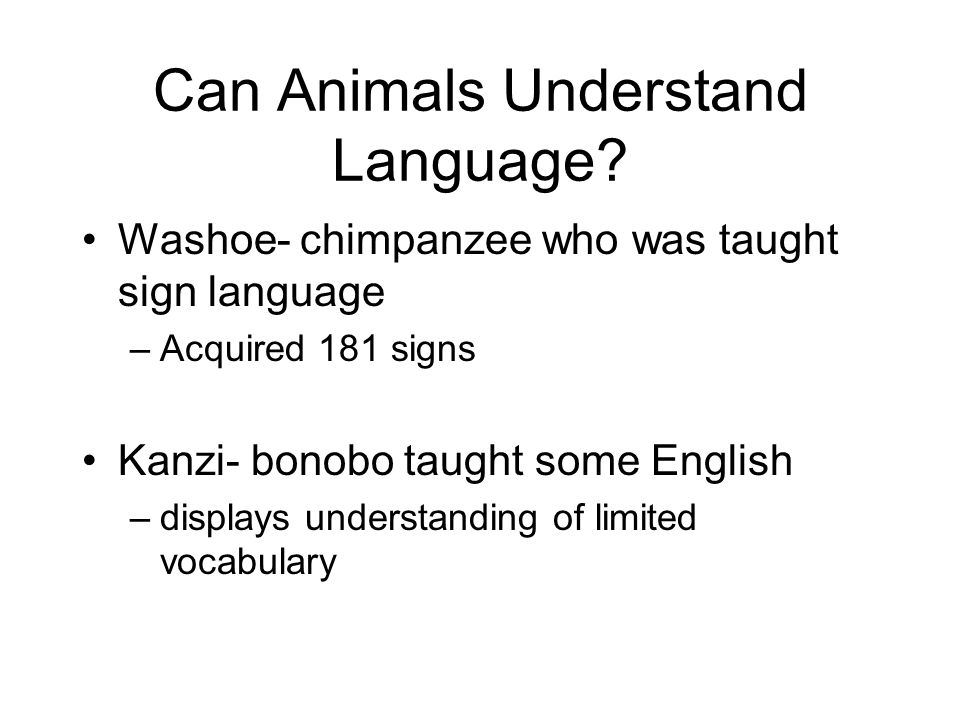 Can Animals Understand Language