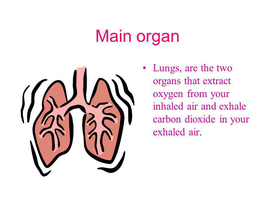Main organ Lungs, are the two organs that extract oxygen from your inhaled air and exhale carbon dioxide in your exhaled air.
