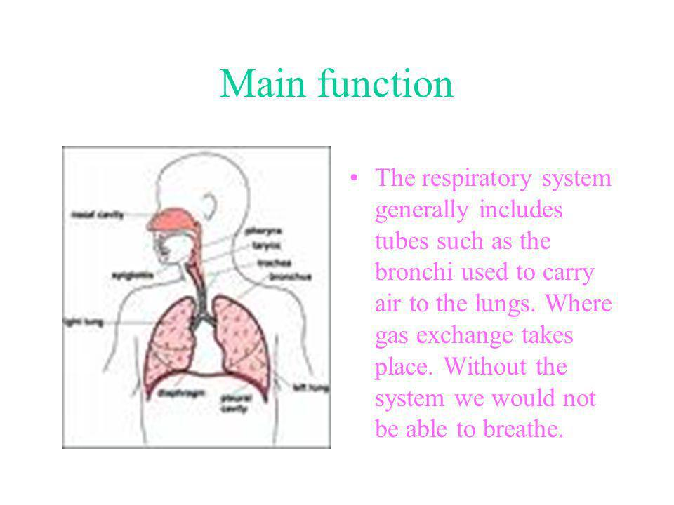 Important parts left lung right lung ppt video online download 5 main function the respiratory system generally includes tubes such as the bronchi used to carry air to the lungs where gas exchange takes place ccuart Images