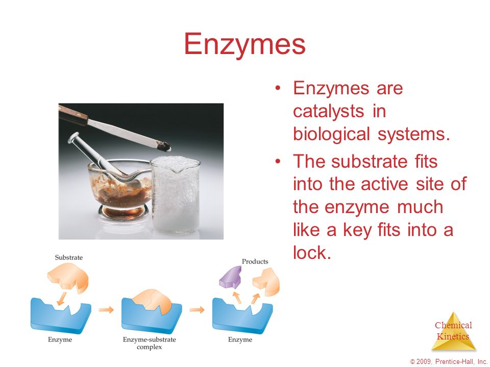 Enzymes Enzymes are catalysts in biological systems.