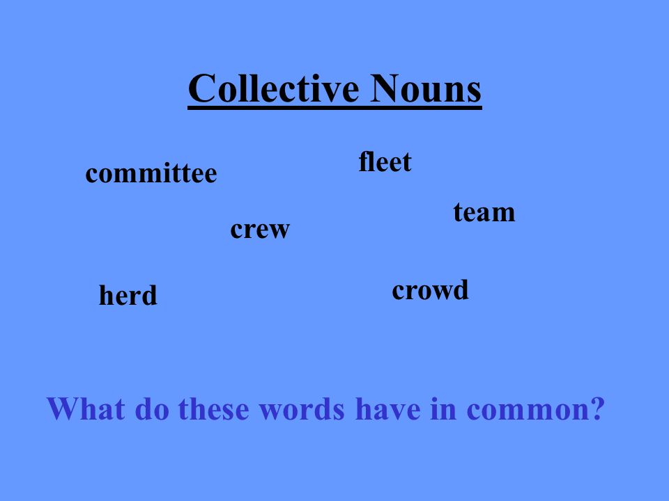 Collective Nouns What do these words have in common fleet committee