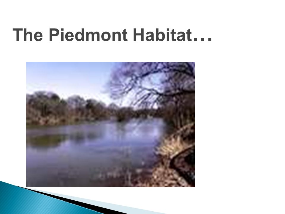 The Piedmont Habitat…