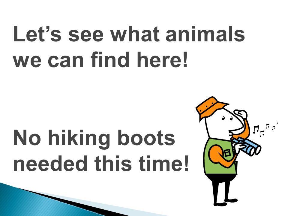 Let's see what animals we can find here!