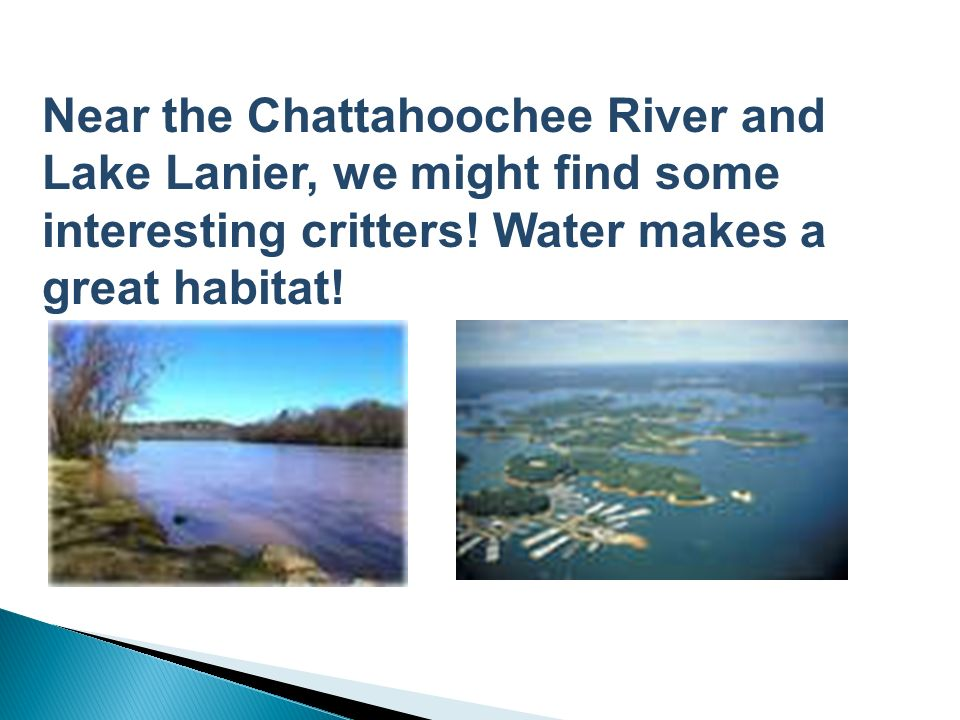 Near the Chattahoochee River and Lake Lanier, we might find some interesting critters.