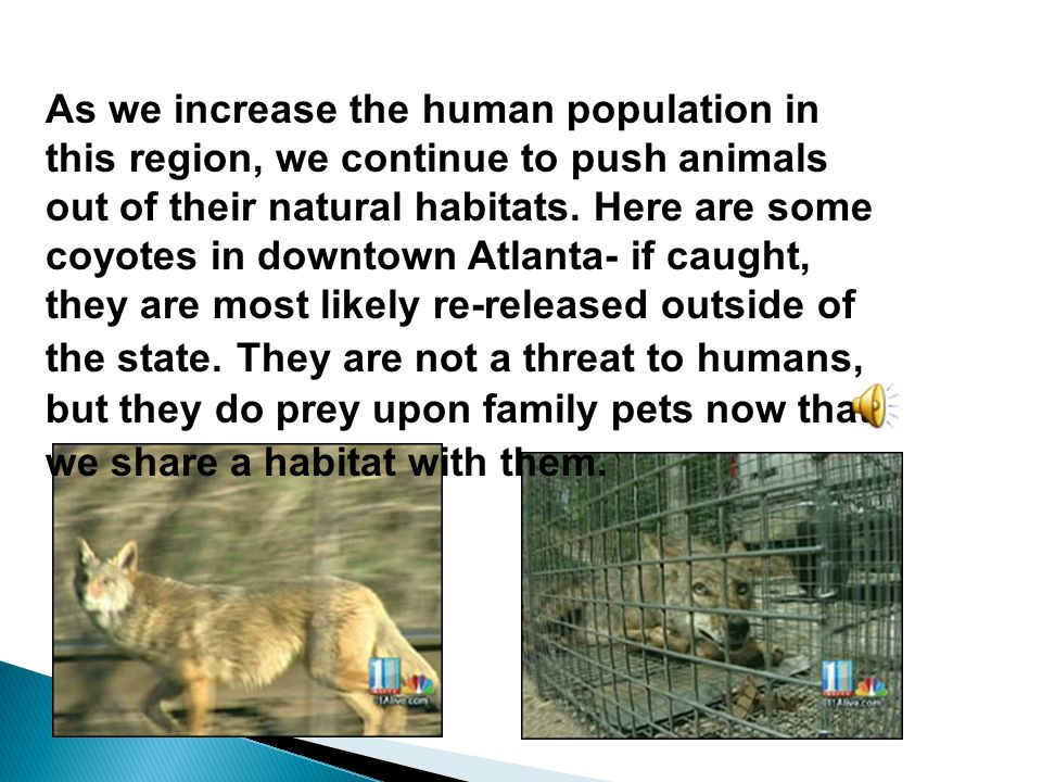 As we increase the human population in this region, we continue to push animals out of their natural habitats.