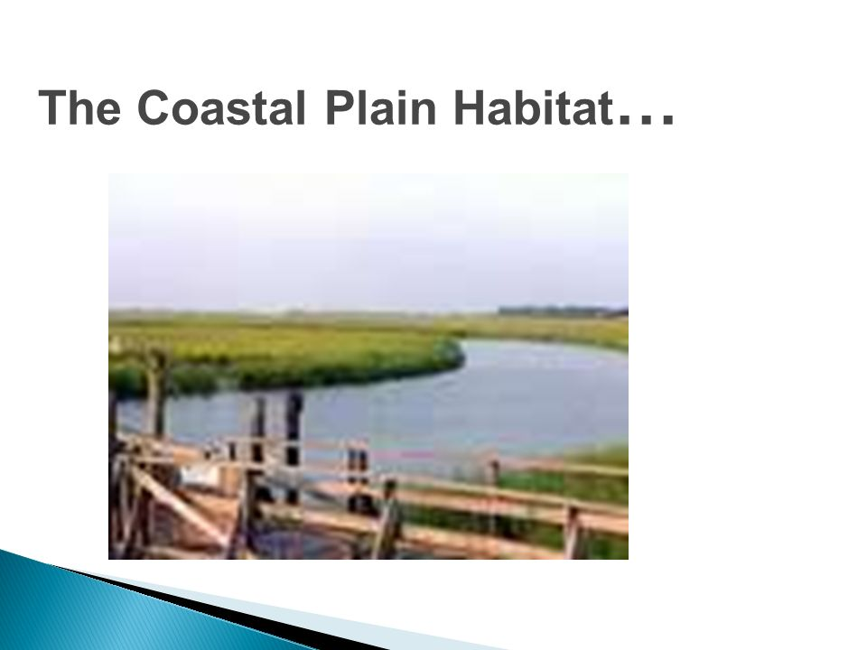 The Coastal Plain Habitat…