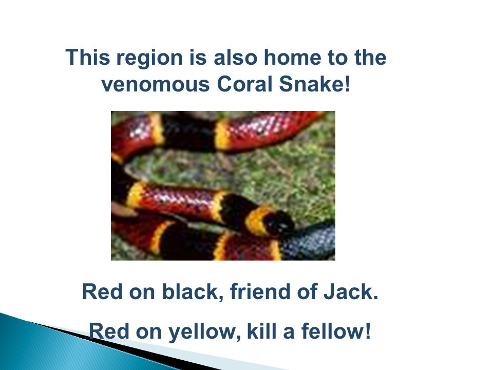 This region is also home to the venomous Coral Snake!