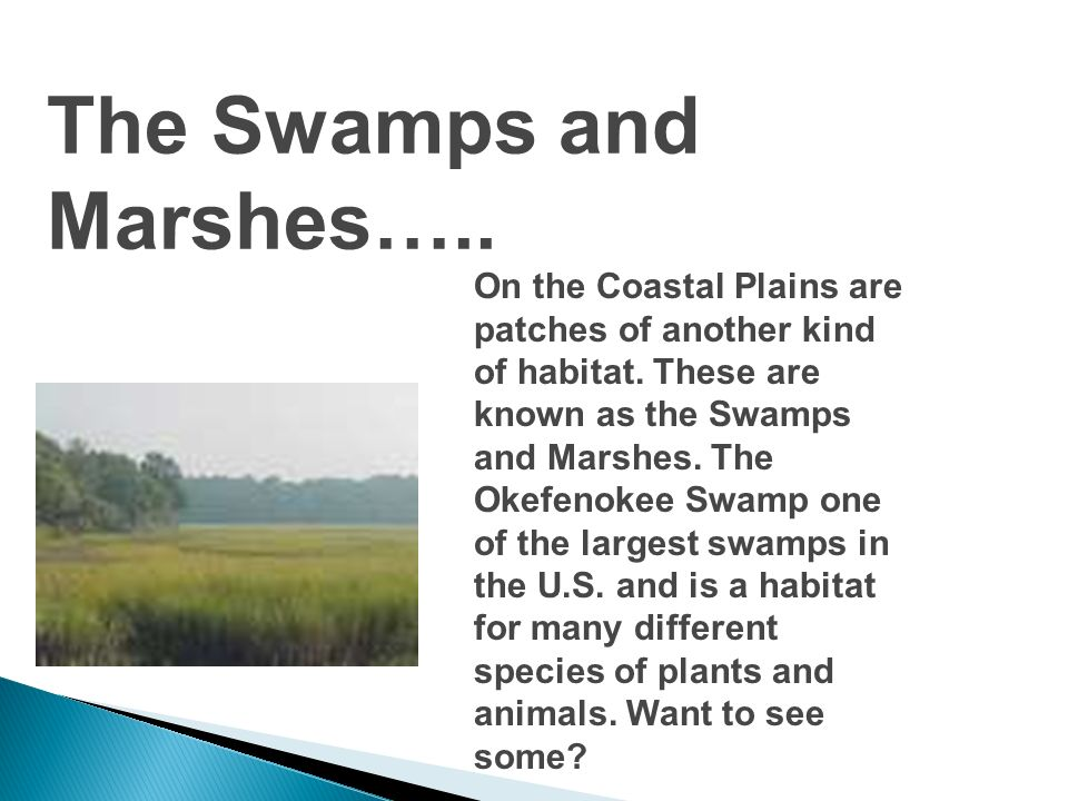 The Swamps and Marshes…..