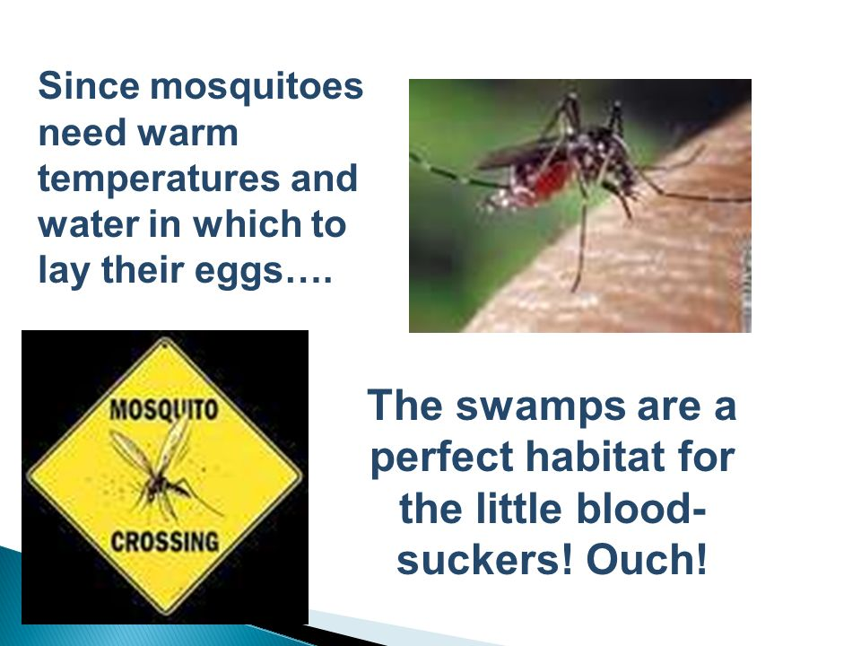 The swamps are a perfect habitat for the little blood-suckers! Ouch!