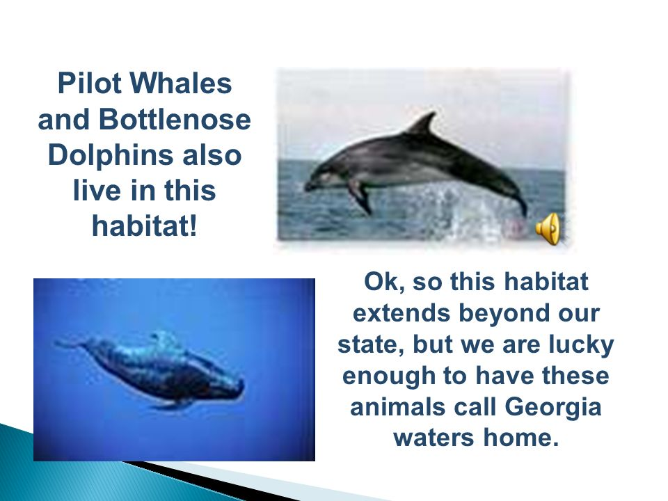Pilot Whales and Bottlenose Dolphins also live in this habitat!