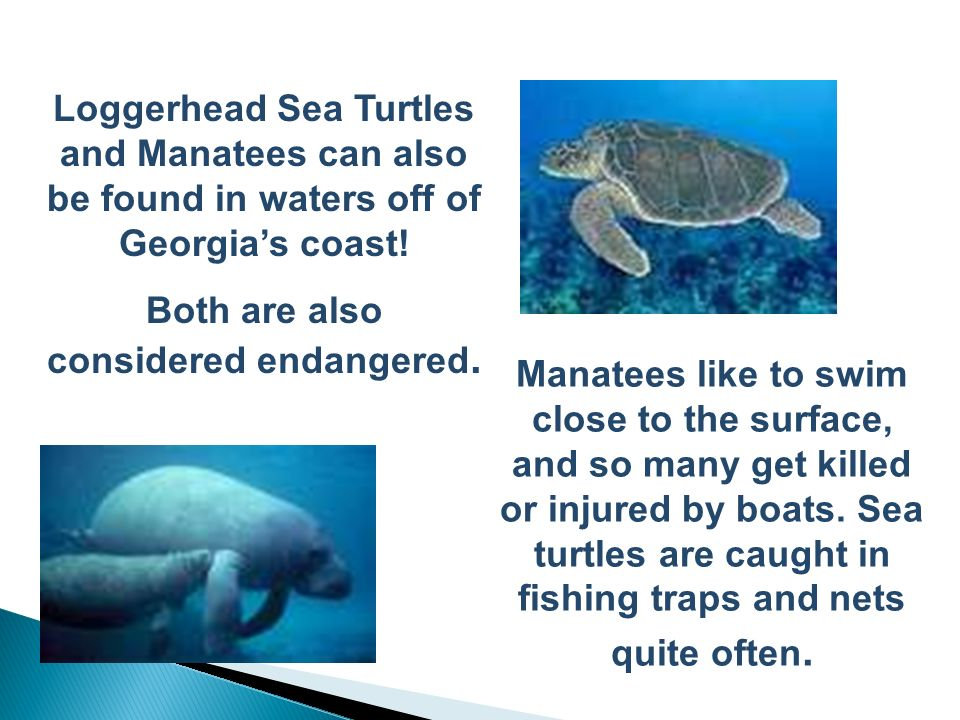 Both are also considered endangered.