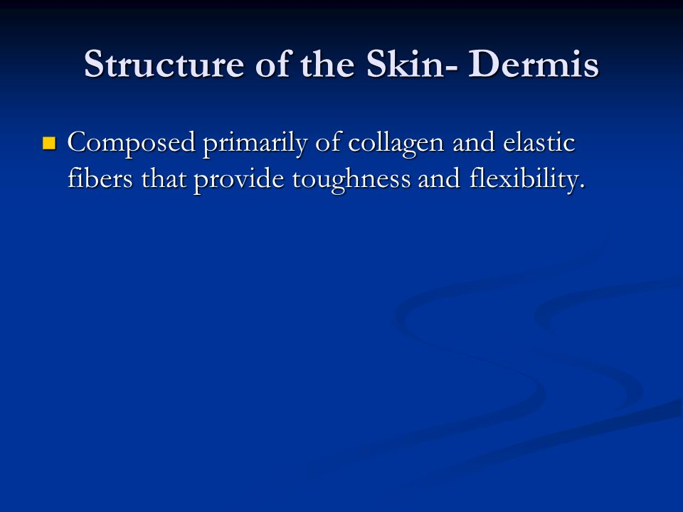 Structure of the Skin- Dermis