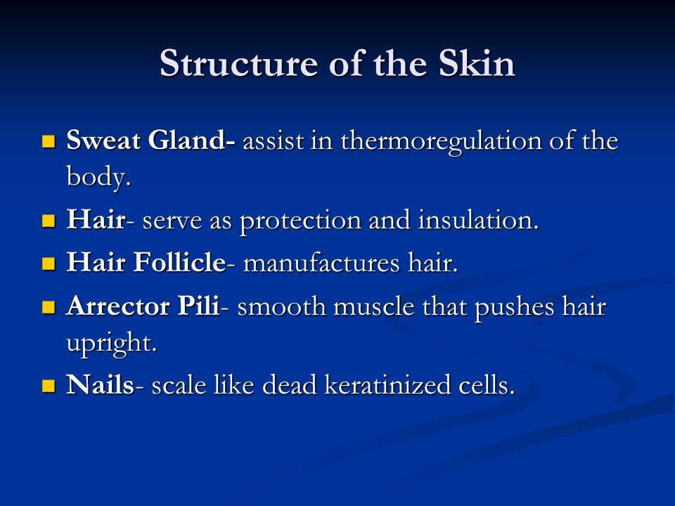 Structure of the Skin Sweat Gland- assist in thermoregulation of the body. Hair- serve as protection and insulation.